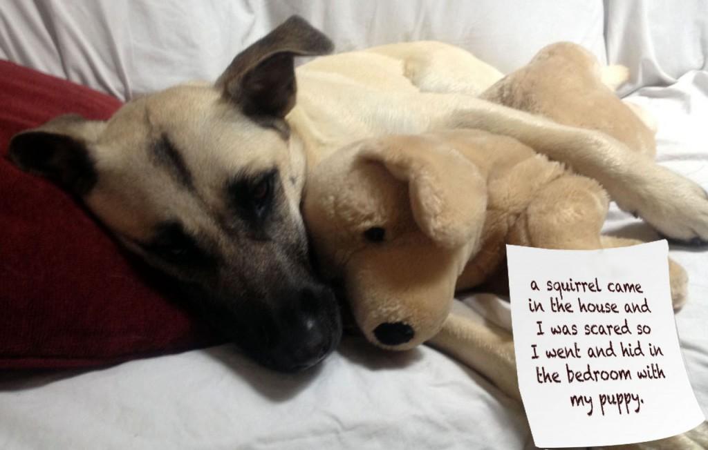 via pethallofshame.tumblr.org - uno scoiattolo è entrato in casa, io mi sono spaventato e mi sono nascosto in camera da letto col mio pupazzo