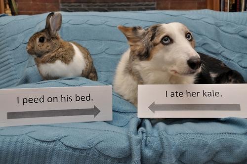 via pethallofshame.tumblr.org - ho fatto pipì sul suo letto, ho mangiato il suo cavolo