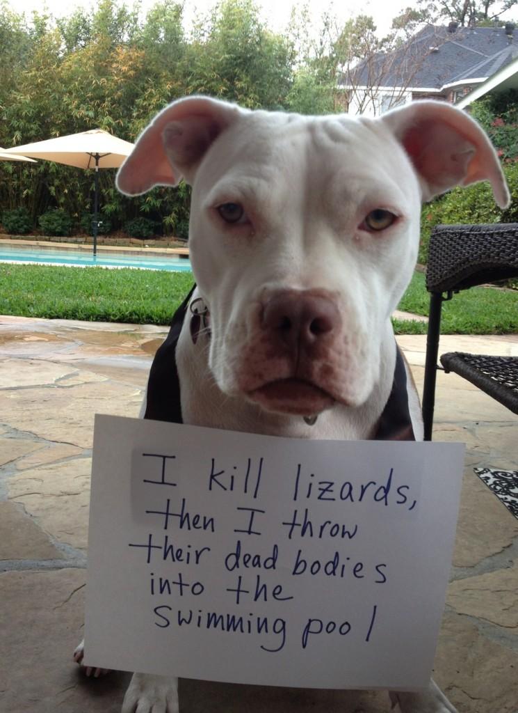 via pethallofshame.tumblr.org - uccido lucertole, poi lancio i loro corpi morti in piscina