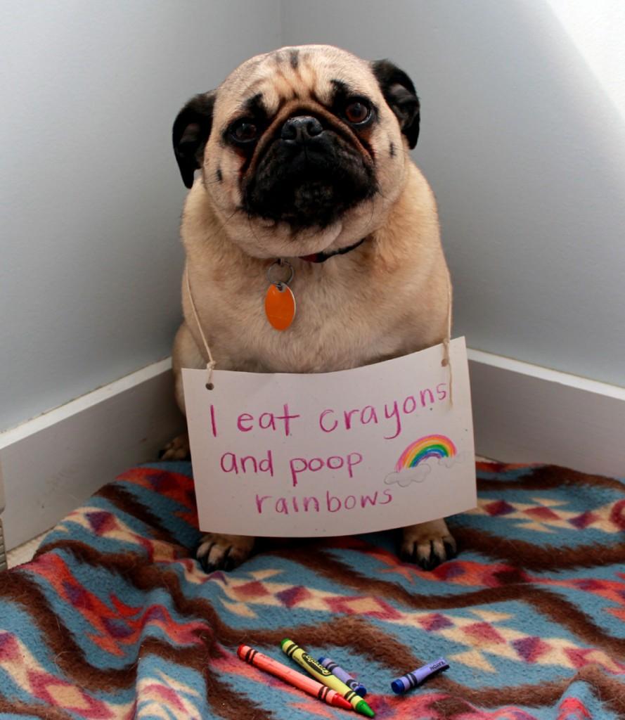 via pethallofshame.tumblr.org - mangio pastelli e caco arcobaleni