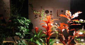 Botanica 2016