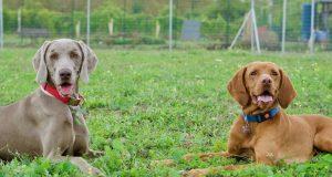 aree sgambatura cani